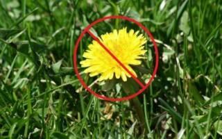 Как избавиться от сорняков – секреты «чистых» грядок