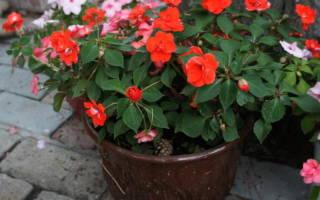 11 невероятно красивых цветов для весеннего контейнерного сада