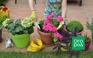 Выращивание растений в контейнерах: 5 правил, о которых стоит помнить