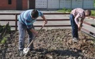 Почва просохла – пора приступать к посадкам
