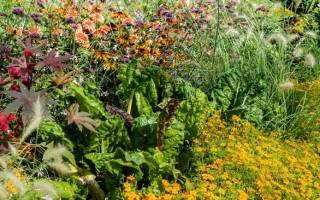Сам себе цветовод: топ-10 цветов-самосевок