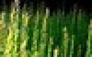 От ростка до корзины: как мастер выращивает и применяет лозу