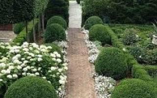 Участок в белых тонах: растения, акценты и особенности