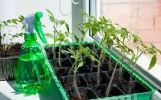 Как вырастить табак: рекомендации опытного садовода