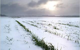 Защищаем растения от корки льда и мокрого снега