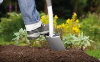 Нужно ли перекапывать огород осенью? Разбираемся в тонкостях осенней перекопки