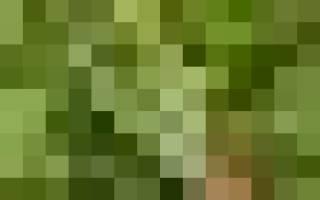 Конусы из туи, шары из самшита – искусство весенней обрезки