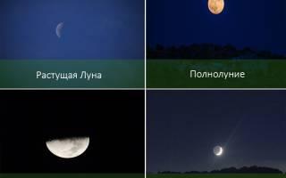 Посев и пересадка растений по фазам Луны – как работает лунный календарь