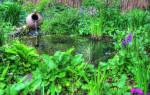 11 идеальных растений для декоративного водоема