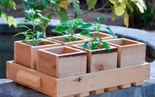 Сооружаем «солнечный» ящик для рассады – пошаговый мастер-класс