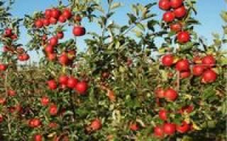 Как ускорить цветение и плодоношение овощных, плодовых и ягодных культур