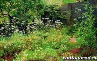 «Черный список» российской флоры дополнился новыми видами