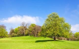 Каким будет июнь 2019: долгосрочный прогноз погоды на весь месяц