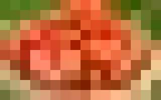 Что сделать из помидоров, если собранный урожай начал портиться