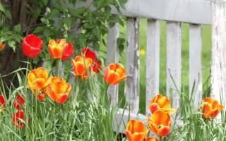 Луковичные первоцветы, о которых мы забыли