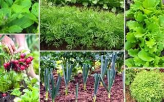 Что посеять и посадить в огороде в июле?