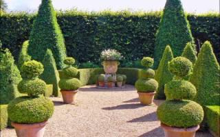 Садовый топиарий своими руками – учимся формировать деревья и кусты