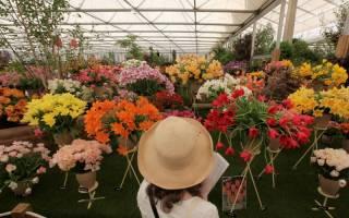 В Чикаго открылась выставка цветов и садового искусства