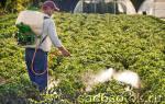 Где зимуют вредители сада и как с ними можно бороться без «химии»