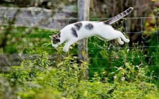 10 гуманных способов, как отвадить котов от грядок