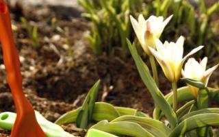 Что нужно сделать весной в саду, огороде и цветнике
