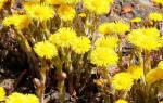 Какие лекарственные травы и растения собирают в мае (41 фото и описание)
