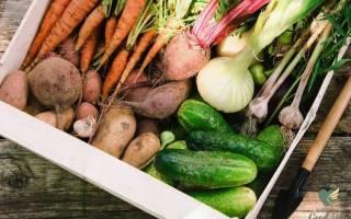 В чем лучше хранить урожай – 7 проверенных материалов