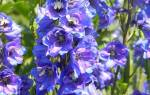 Растения июля: необычные сорта для уникального цветника