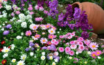 Чтобы клумба летом радовала цветами, рассадой пора заняться прямо сейчас!