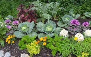 5 ошибок, которые совершают начинающие садоводы