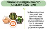 МикоХелп – эффективный биофунгицид для защиты и подкормки растений