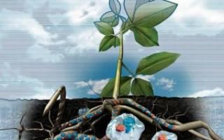 Что такое гидрогель и как его использовать в саду, огороде, цветнике