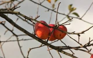 Азотные удобрения осенью: вносить или нет