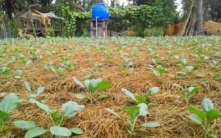 Как уберечь рассаду и недавно пересаженные растения от палящего солнца