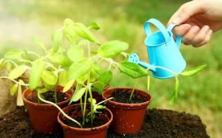 10 ошибок, которые вы допускаете при посеве семян на рассаду