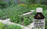 21 необычный способ применения березового дегтя в саду и огороде
