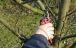 Как обрезать дерево, чтобы не навредить ему – 5 важных правил