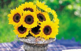9 очаровательных сортов подсолнечника для яркого цветника