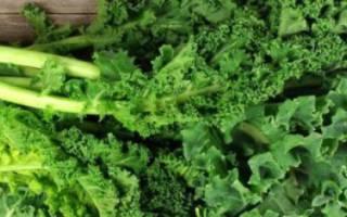 Выращивание листовой капусты кале – все об агротехнике и сортах