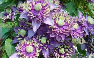 Названы самые красивые декоративные растения 2016 года