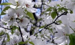 Что посеять и посадить в огороде в мае?