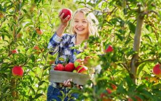 Что делать в августе – 30 самых важных дел в саду, огороде и цветнике