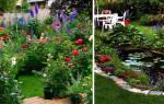 Создаем райский палисадник или сад своими руками