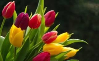 Стимулируем цветение