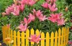 Бордюры для клумб и газона: 7 классических идей