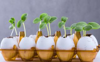 Емкости для рассады из яичной скорлупы