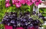 Контейнеры для уличных цветов – как выбрать и какие растения посадить