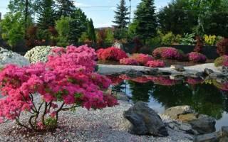 Какие декоративные кустарники посадить в саду?
