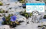 Февральские снегопады: чего бояться дачникам и как уберечь ветви растений