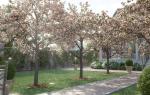 9 вопросов про деревья-крупномеры